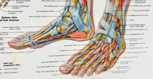 voetonderzoek sengers podotherapie wijchen