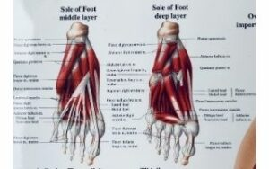 voetenzool sengers podotherapie wijchen