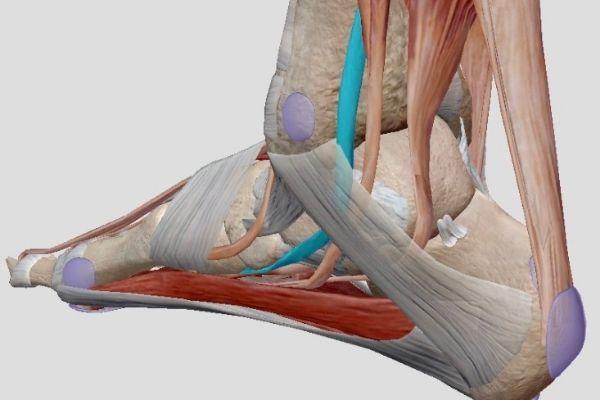 Pijn aan de binnenkant enkel, tendinopathie m. Tibialis posterior