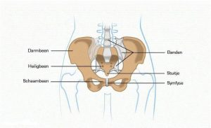 SI-gewrichten heiligbeen/bekkenhelften podotherapie wijchen